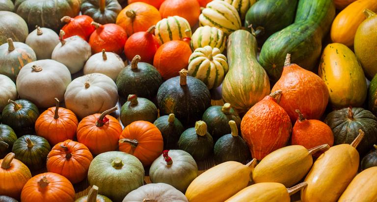 Vários tipos de abóboras - imagem ilustrativa do artigo Alimentos de outono e os seus benefícios by Lia Faria